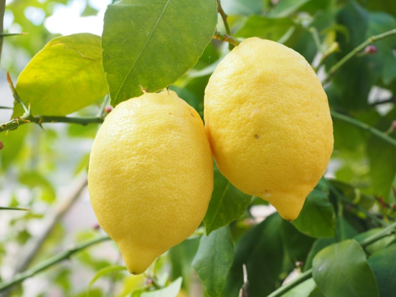 Folsäure - Citrus Limon
